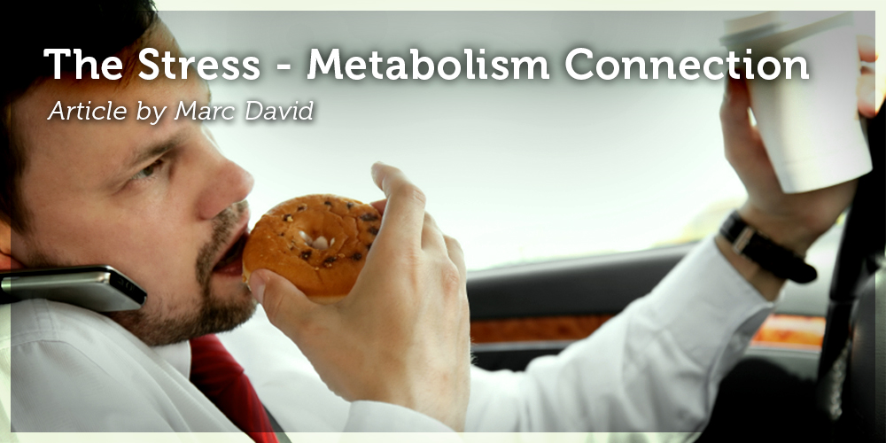 The Stress – Metabolism Connection